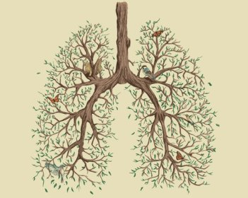 Tree Lungs